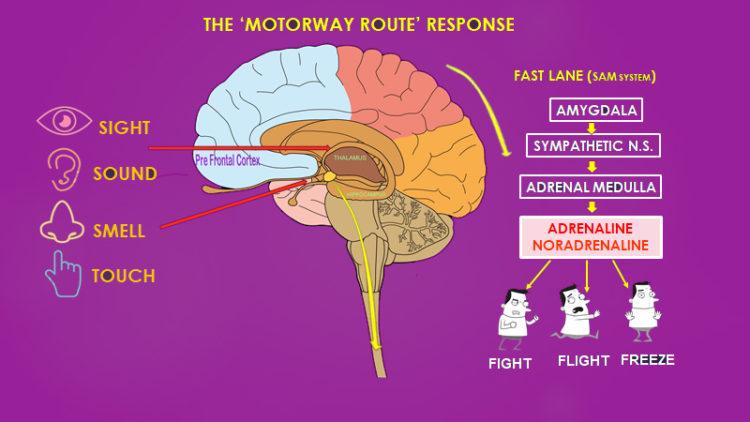 MOTORWAYFAST1