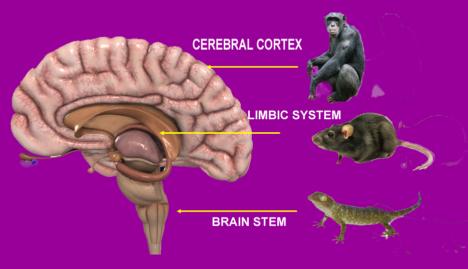 brain1B_edited2